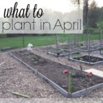 What I'm Planting in April