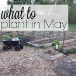 What I'm Planting In May