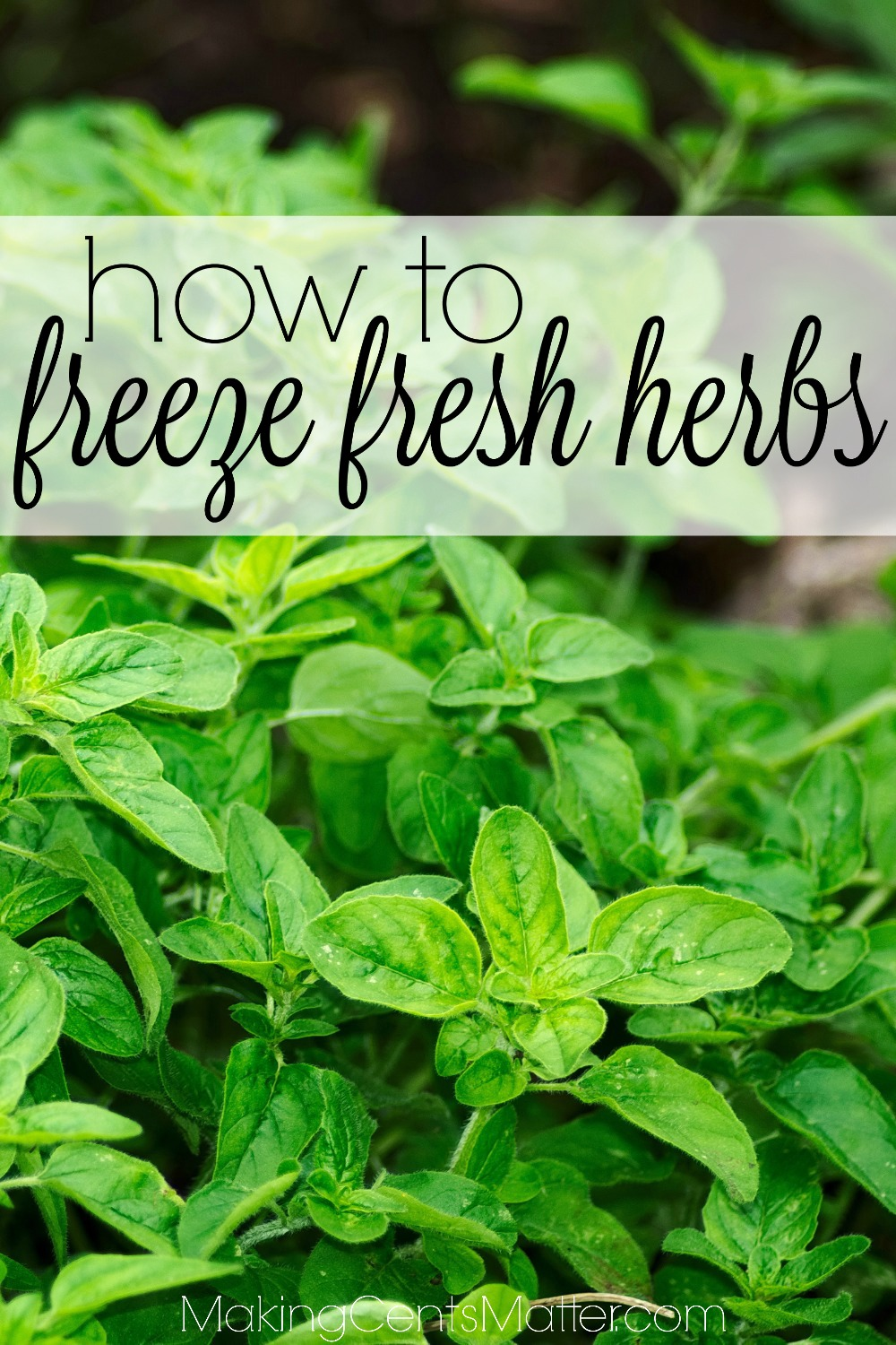 How To Freeze Fresh Herbs