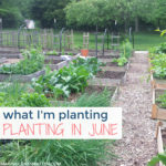 What I'm Planting In June