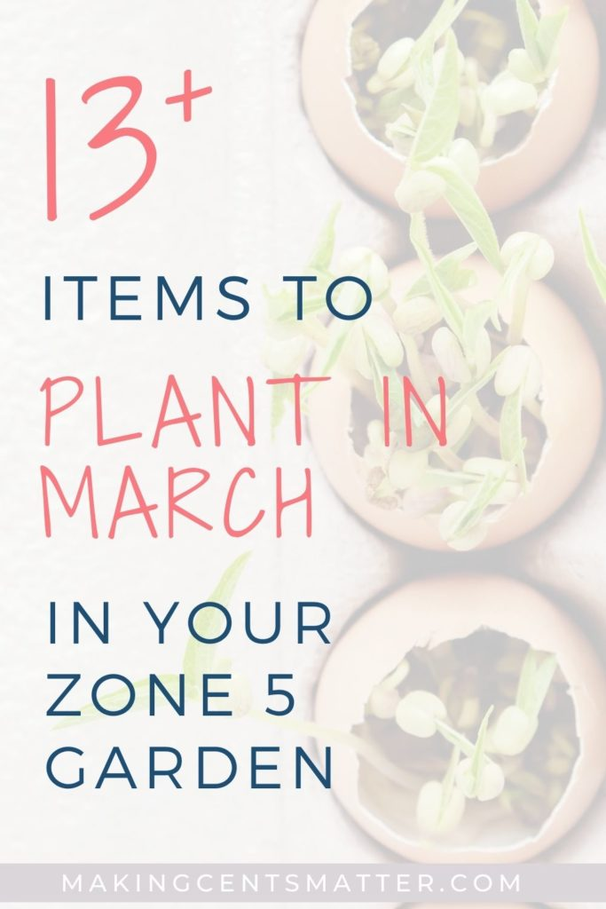 13+ Items To Plant In March
